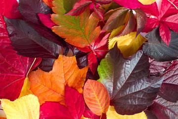 Herbstblätter-Variation