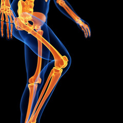 medical 3d illustration of the leg bones
