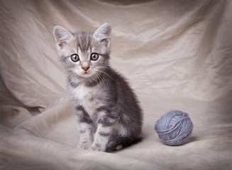 gray kitten with ball