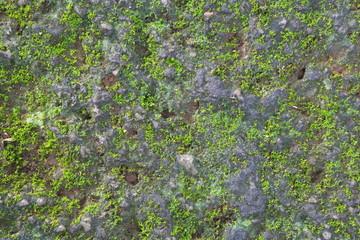 Green Moss Seamless Tileable Texture