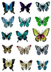 カラフルな蝶々