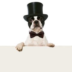 Hund mit Zylinderhut