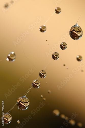 Dew © alenahk