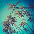 Leinwanddruck Bild - Retro Diagonal Palm Trees In Hawaii