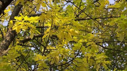 Herbstlaub 12