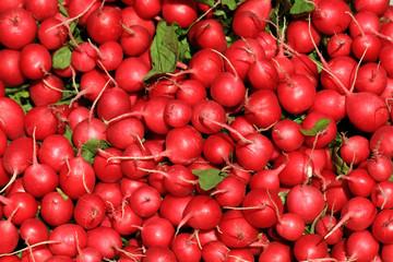 radishes background