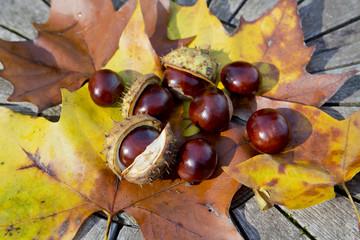 Kastanien im Herbst