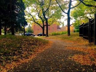 Fall in canada.