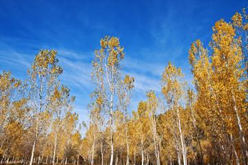 otoño de hojas secas y cielo azul