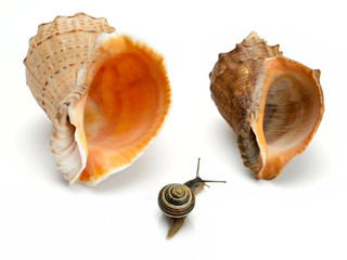 Snail and two sea cockleshells
