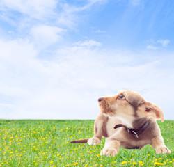 cute mongrel on a green lawn
