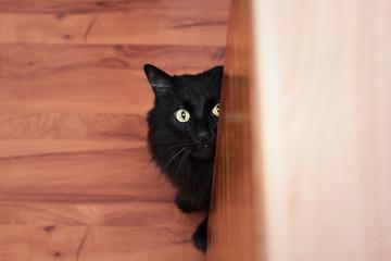 portrait completely black cat