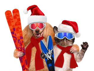 Cat and dog in red Christmas hats with skis