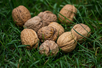 Walnuts on a grass lawn