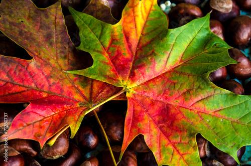 canvas print picture autumn leaves