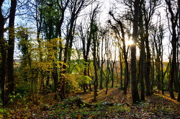 Autumn sunset through the trees