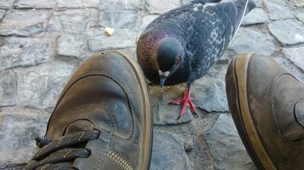 Paloma junto a zapatos