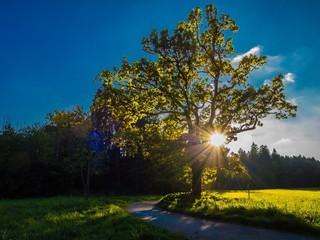 Sonnenuntergang in Maisinger Schlucht