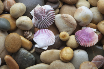 Sea shells on pebbles background