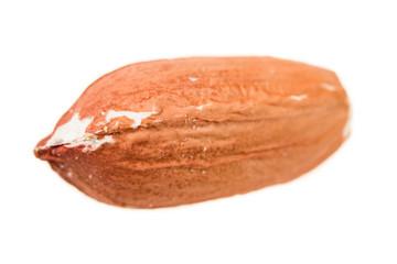 Peanut isolated with peel