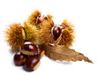 Groups of chestnut nuts on white close up