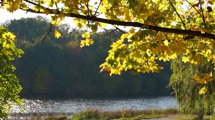 Autumn leaves & river