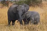 Elephant brothers - Fine Art prints