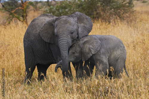 Canvas Afrika Elephant brothers