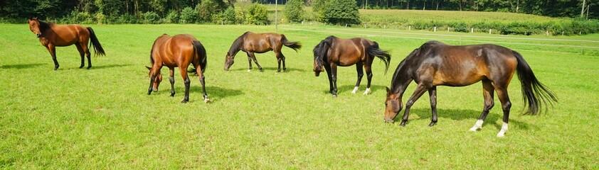 Pferde auf einer Pferdekoppel, Breitbild