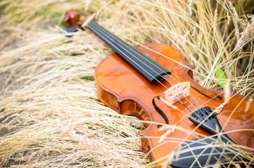 Скрипка на сене