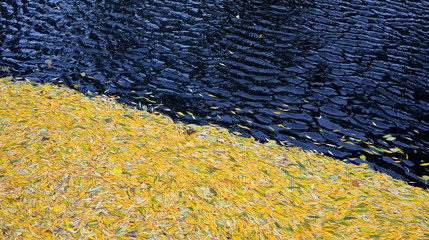 abstract background. autumn leaves on dark water.