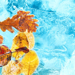 Fallen autumn leaves in the blue ice