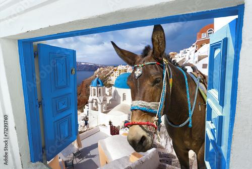 Foto Spatwand Ezel île de Santorin Cyclades Grèce