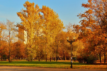 Autumn landscape. City square in golden autumn foliage