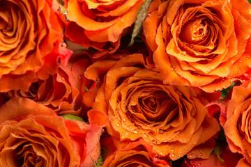 Background texture of romantic orange roses