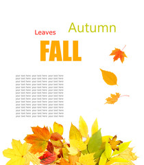 Autumn concept