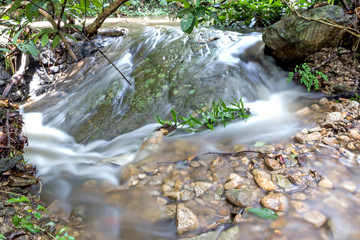 Stream flowing through the forest from the mountain slope.