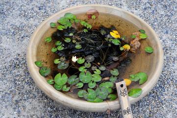 Lotus leaves-4