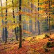 Foggy autumn forest
