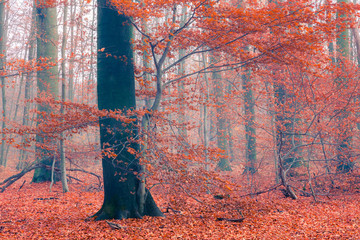 Colorful tree in the autumn forest