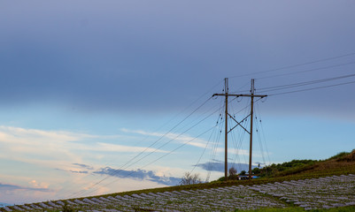 electric pole in natural environment