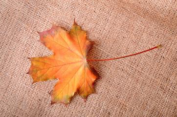 Autumnal maple leaf on sackcloth