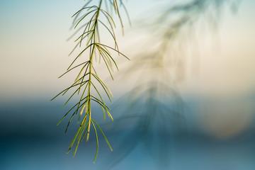Thin blades of grass over white-blue gradient background.