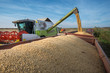 canvas print picture - Harvesting of soybean