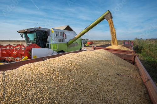 canvas print picture Harvesting of soybean