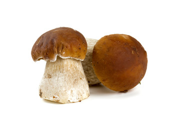 boletus mushrooms over white