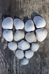Heart made of sea shells