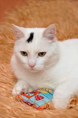 Katze im gemütlichen Zuhause