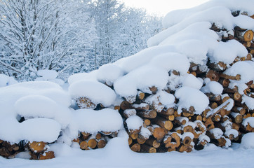 cut logs in a winter wood under snowdrifts