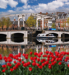 Amsterdam city with boats on canal against red tulips in Holland